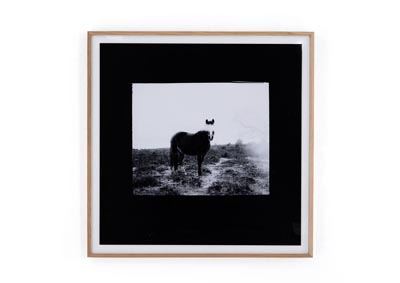 Image for Natural Oak + Acrylic Shadow Box + Photo Paper Art Studio Blank Horse By Annie Spratt Framed Paper